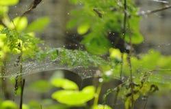 Goutte de l'eau sur le filet d'araignée dans le jardin photo stock
