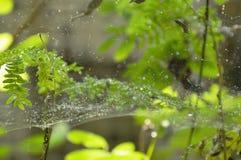 Goutte de l'eau sur le filet d'araignée dans le jardin images stock