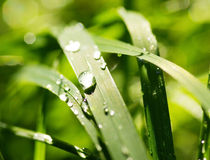 goutte de pluie Image stock