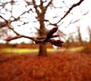Goutte de pluie d'arbre Image libre de droits
