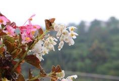 Goutte de pluie en fleur photo stock