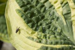 Goutte de pluie et mouche sur une plante verte Photographie stock libre de droits
