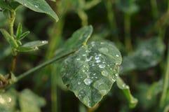 Goutte de pluie sur l'herbe photographie stock
