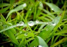 Goutte de pluie sur l'herbe verte Photo libre de droits