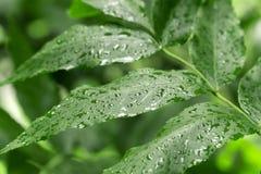 Goutte de pluie sur la feuille photos libres de droits