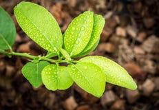 Goutte de pluie sur la feuille verte Photos stock