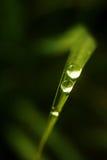 Goutte de pluie sur la lame Photos libres de droits
