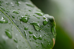 Goutte de pluie sur la lame verte Images stock