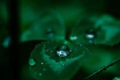 Goutte de pluie sur une feuille Photo stock