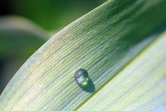 Goutte de pluie verte de lame Photos libres de droits