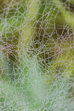 Goutte de rosée de toile d'araignée de l'eau Images libres de droits