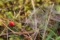 Goutte de rosée de toile d'araignée de l'eau Images stock