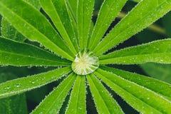Gouttelette d'eau gentille sur les feuilles vertes, macro photo photographie stock libre de droits