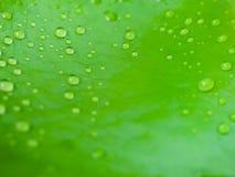 Gouttelette d'eau sur la feuille de lotus de nénuphar avec la macro vue photos stock