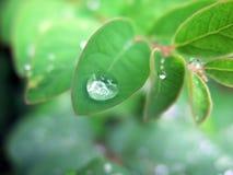 Gouttelette de pluie sur la lame verte Images libres de droits