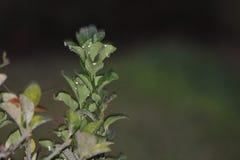 Gouttelettes d'eau évidentes sur les feuilles vertes photographie stock