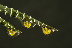 Gouttelettes d'eau avec des fleurs Photo libre de droits
