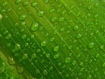 Gouttelettes d'eau, lame verte photo libre de droits