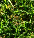 Gouttelettes d'eau sur des fleurs avec le fond herbeux vert image stock