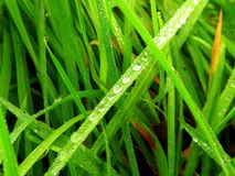 Gouttelettes d'eau sur l'herbe Photo libre de droits