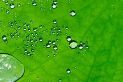 Gouttelettes d'eau sur la feuille de lotus Image stock