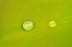 Gouttelettes d'eau sur la lame de lotus Image libre de droits