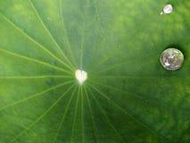 Gouttelettes d'eau sur la lame de lotus Photos libres de droits