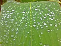 gouttelettes d'eau sur la lame verte Images libres de droits