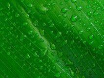 Gouttelettes d'eau sur la lame verte, Photo libre de droits