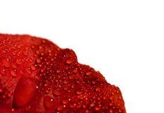 Gouttelettes d'eau sur une fleur Image libre de droits