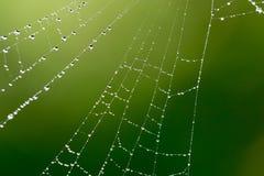 Gouttelettes d'eau sur une toile d'araignée en nature Photographie stock