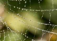 Gouttelettes d'eau sur une toile d'araignée en nature Image libre de droits