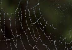 Gouttelettes d'eau sur une toile d'araignées Images stock
