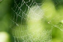 Gouttelettes d'eau sur une toile d'araignée en nature Photo libre de droits