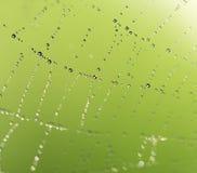 Gouttelettes d'eau sur une toile d'araignée en nature Images libres de droits