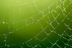 Gouttelettes d'eau sur une toile d'araignée en nature Photographie stock libre de droits