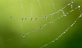Gouttelettes d'eau sur une toile d'araignée en nature Image stock