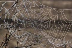 Gouttelettes dans une toile d'araignée Image stock