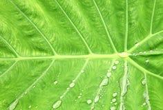 Gouttes de l'eau après pluie Photo libre de droits