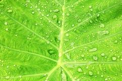 Gouttes de l'eau après pluie Image libre de droits
