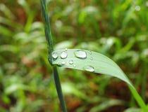 Gouttes de l'eau sur l'herbe verte Images libres de droits