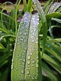 Gouttes de l'eau sur la feuille verte après pluie Photo libre de droits