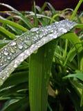 Gouttes de l'eau sur la feuille verte après pluie Image stock