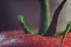 Gouttes de l'eau sur la tomate Photo libre de droits