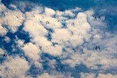 Gouttes de l'eau sur le vitrail au-dessus du ciel bleu Photo libre de droits