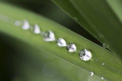 Gouttes de l'eau sur les feuilles vertes après pluie Images stock