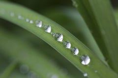 Gouttes de l'eau sur les feuilles vertes après pluie Image stock