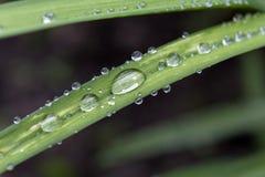 Gouttes de l'eau sur les feuilles vertes après pluie Photo libre de droits