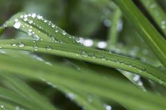 Gouttes de l'eau sur les feuilles vertes après pluie Images libres de droits