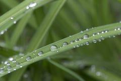 Gouttes de l'eau sur les feuilles vertes après pluie Photos stock